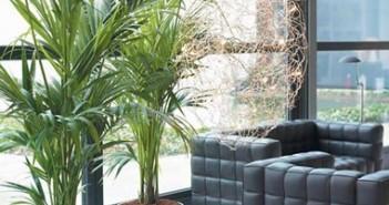 plantas-para-interiores-rafis_mini