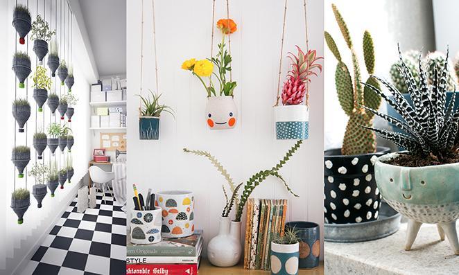 plantas-em-casa