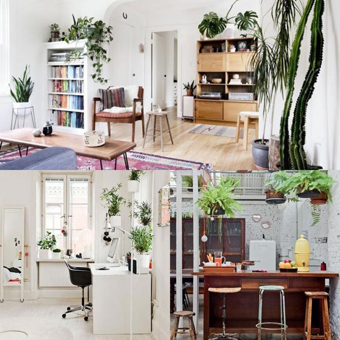 descubra como usar plantas na decoracao