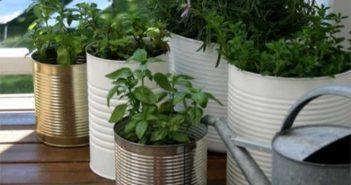 como ter uma horta em apartamento horta em vasos