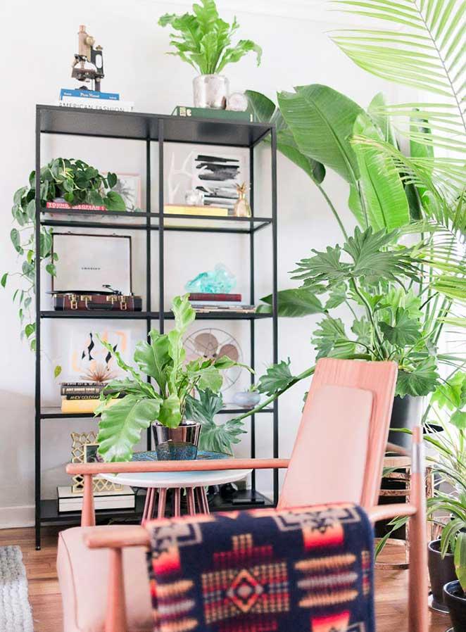 decoracao com plantas para estante