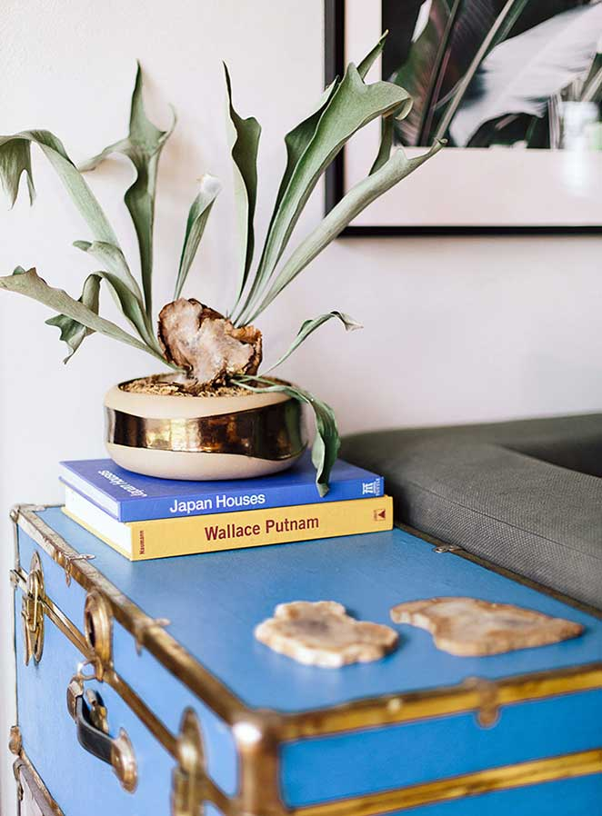 decoracao com plantas para mesa lateral