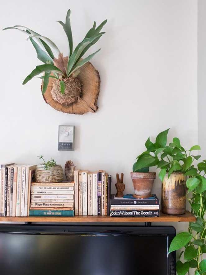 plantas-em-apartamento-com-animais-chifre-de-veado