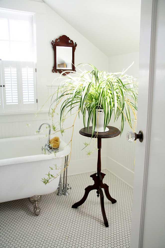 plantas-em-apartamento-com-animais-clorofito-banheiro