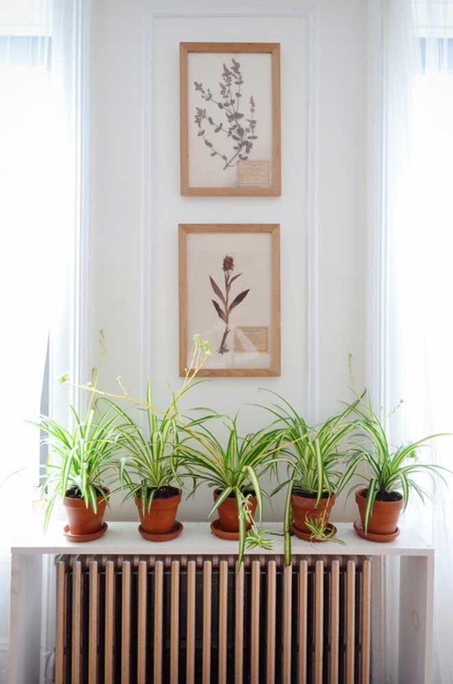 plantas em apartamento com animais clorofito