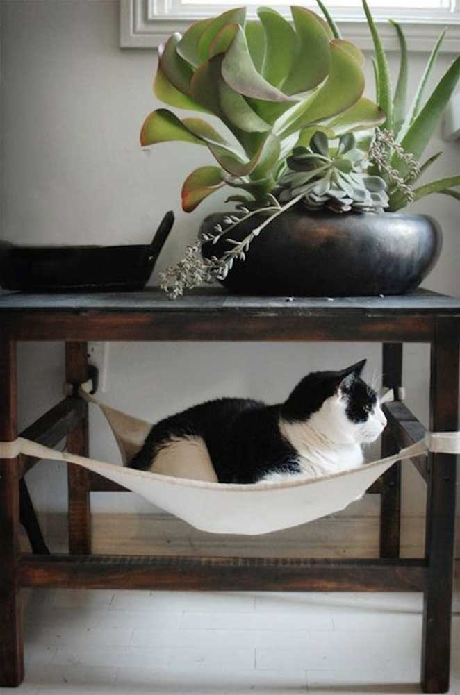 dicas para quem quer ter plantas em apartamento com animais