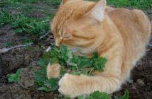plantas em apartamento com animais erva do gato