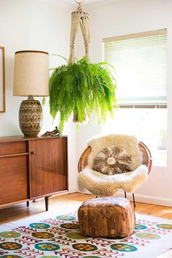 plantas-em-apartamento-com-animais-samambaia-de-boston