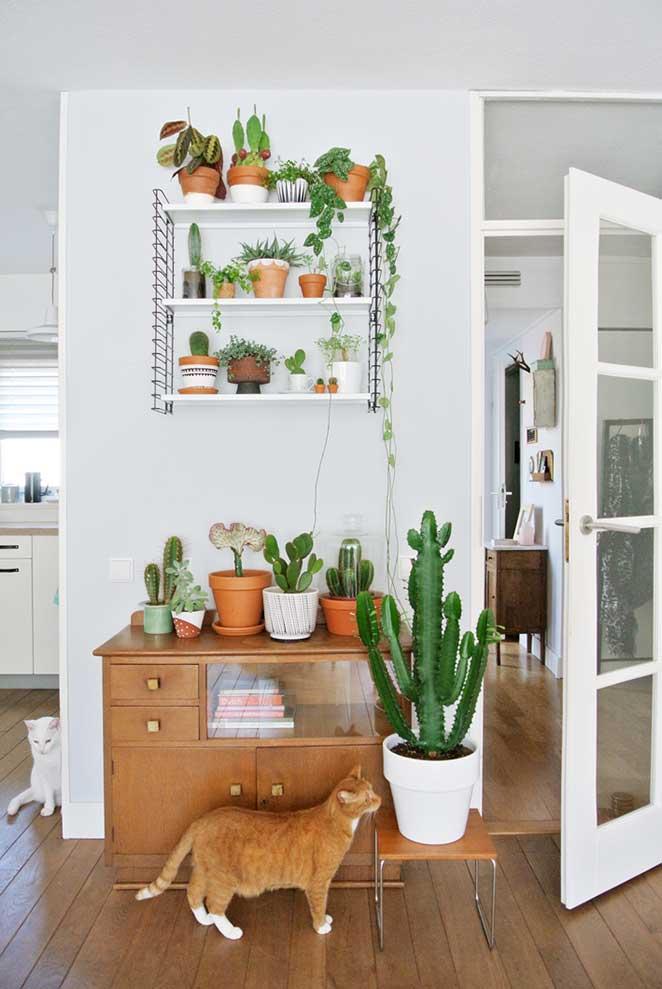 plantas em apartamento com animais