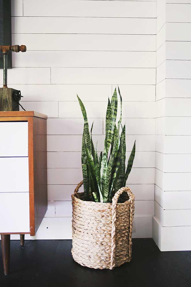 5-plantas-faceis-de-cuidar-para-voce-ter-em-casa-espada-de-santa-barbara