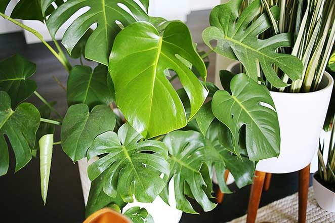 5 plantas f ceis de cuidar para ter em casa Weird plants to grow indoors
