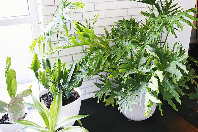 5-plantas-faceis-de-cuidar-para-voce-ter-em-casa-imbe-4