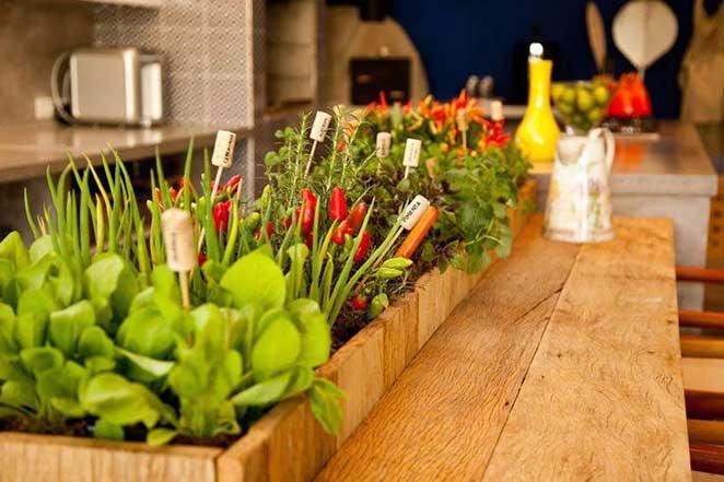 Horta-vertical-o-que-plantar-alimentos