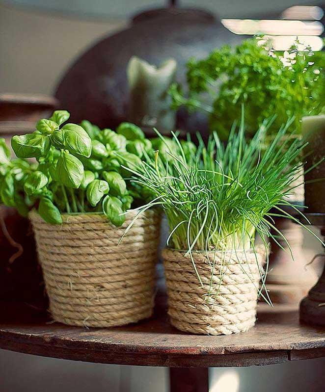 hortal vertical o que plantar