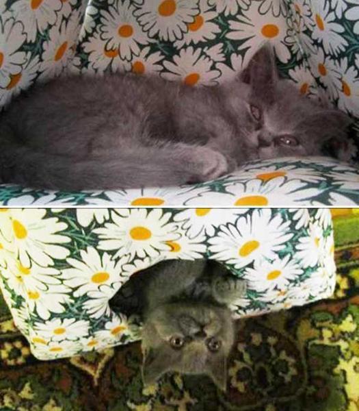como fazer uma casinha de gato