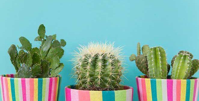 Faça você mesma: decoração para cachepot