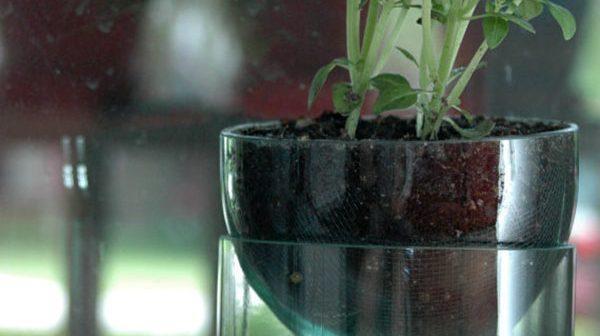 Como fazer cachepô para plantas