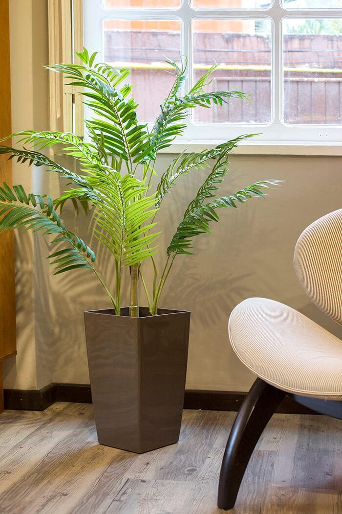 Plantas extremamente duráveis e exigem pouca manutenção