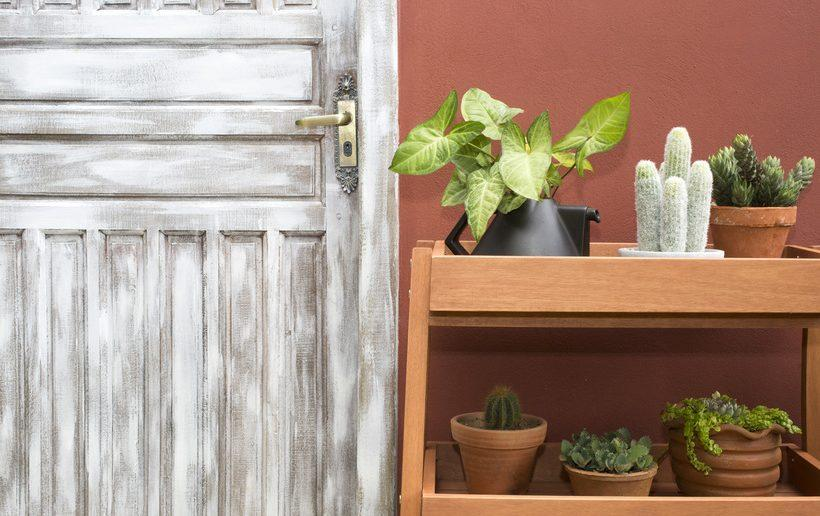 estante holi com plantinhas