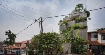 Plantas comestíveis crescem na casa urbana