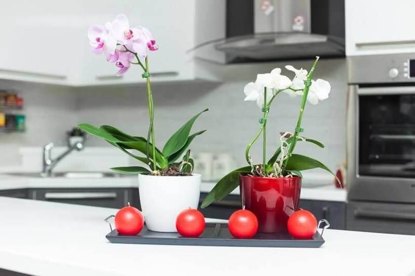 Orquídeas na cozinha via Viva Decora