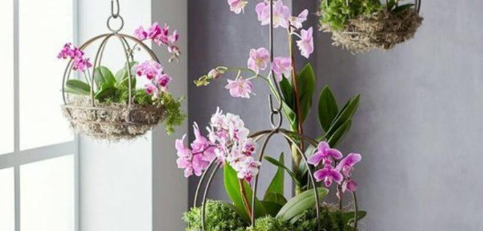 Orquídeas: como usar na decoração?