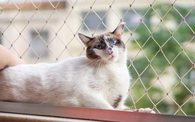 Rede na janela do apartamento para proteção dos pets.